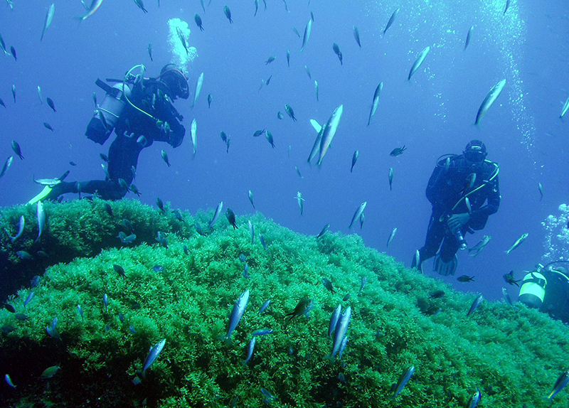 scuba diving gozo reef
