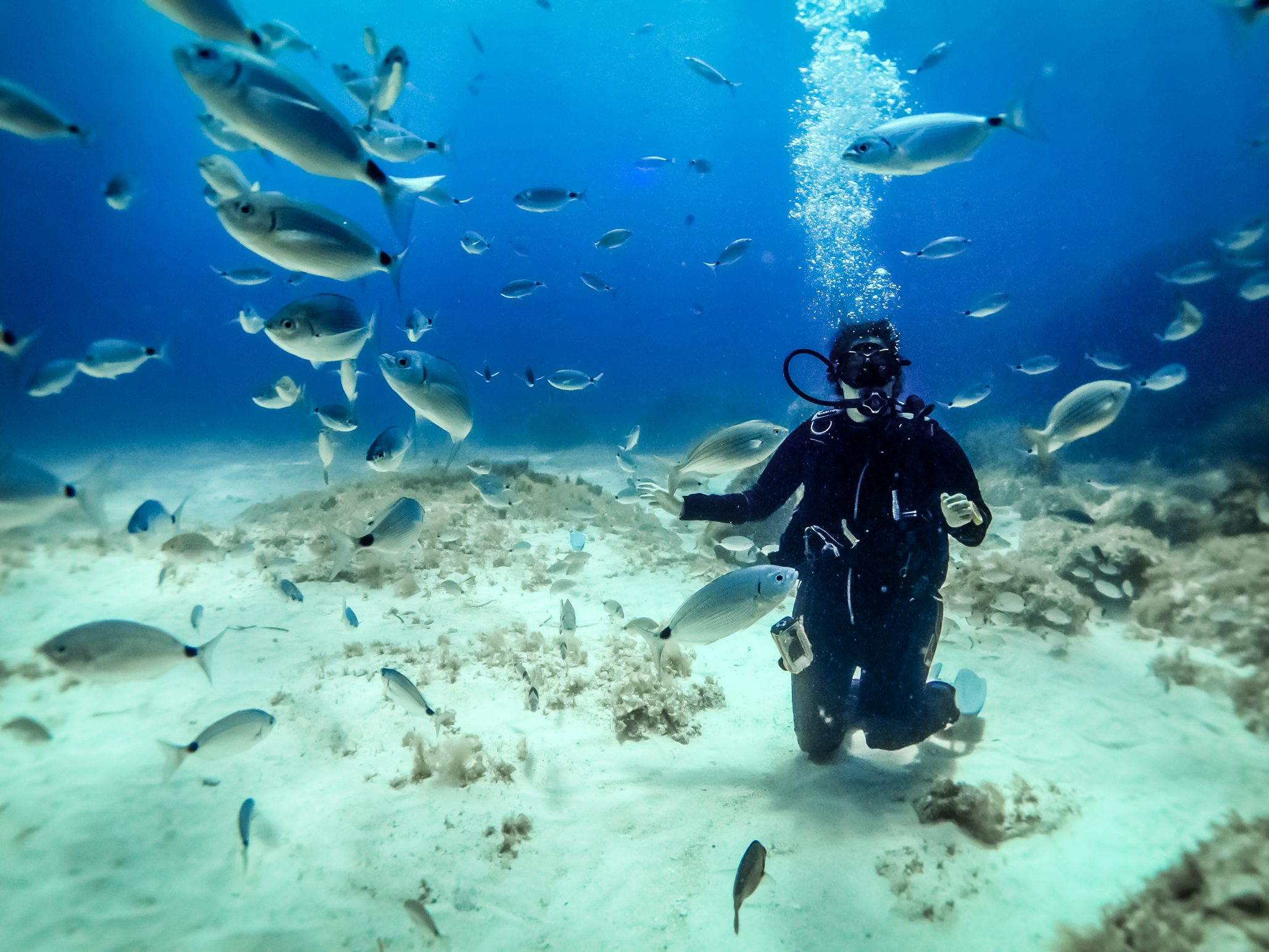 Young female scuba diver with fish on Comino, Malta