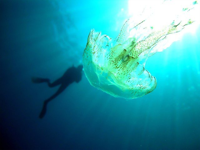 diver and jellyfish off the coast of gozo malta